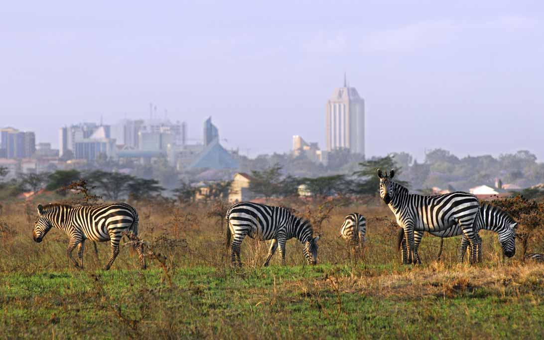 enkosi-africa-safari-kenya-nairobi-skyline-national-park-kenya-tourism-board-zebra