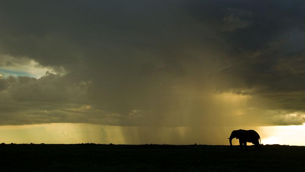 Elefante bajo tormenta en Duba Plains, Botswana