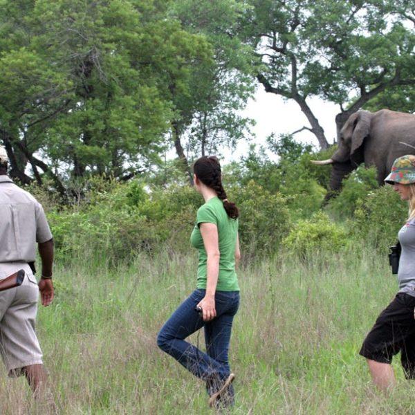 De Acampada en el Parque Kruger; el Nuevo Explorer Camp de Jock Safari