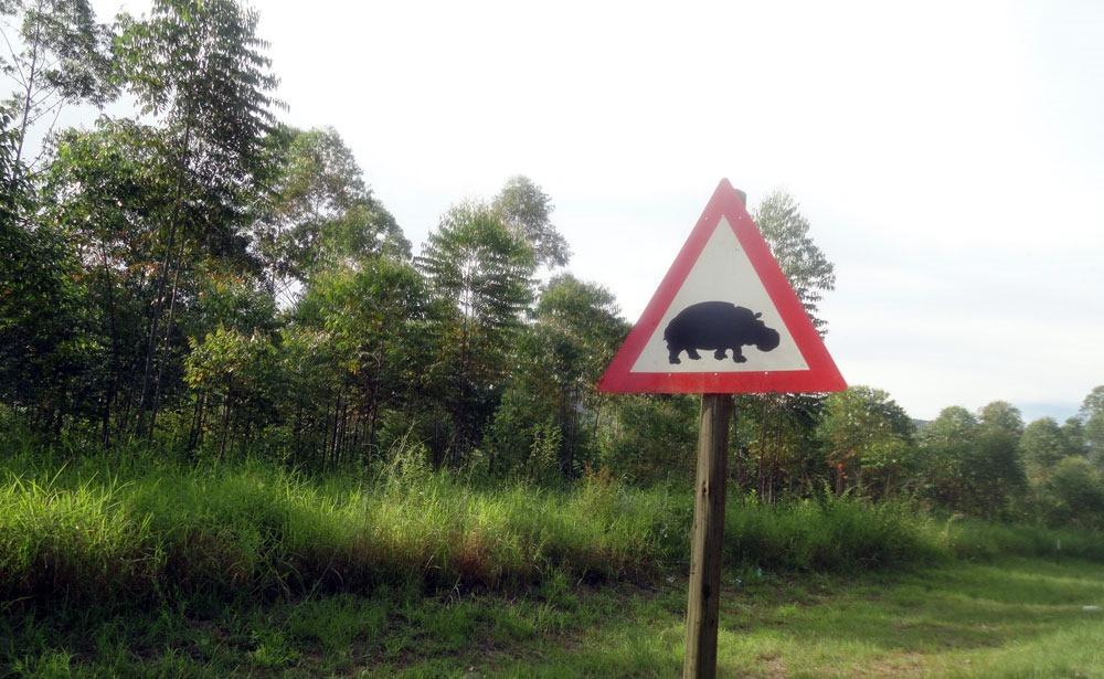 senal-hipopotamo panorama route enkosi africa sudafrica
