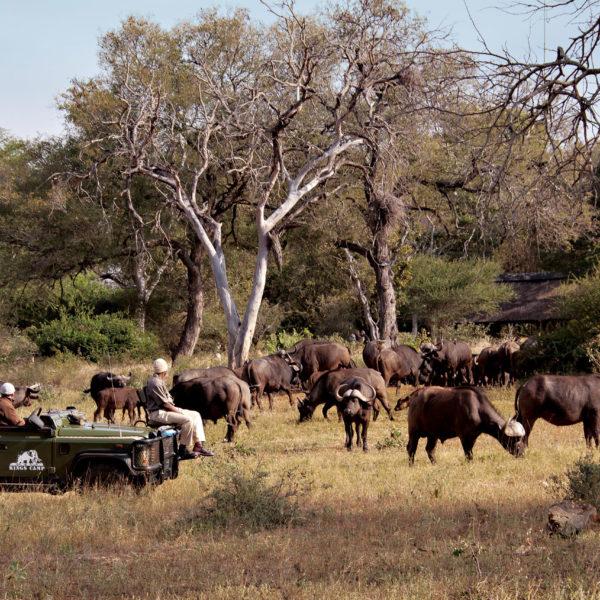 La Reserva Privada de Timbavati