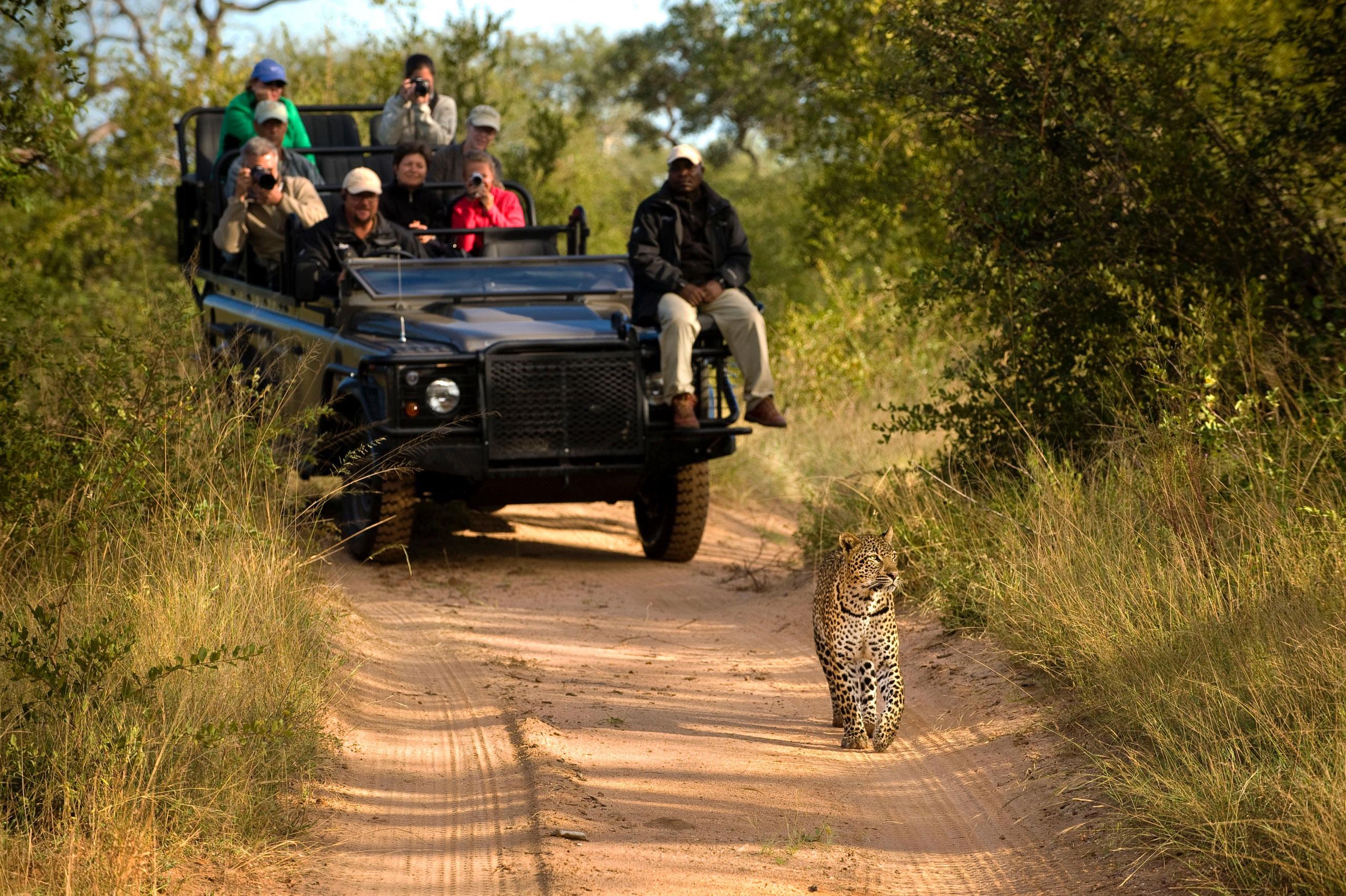 Qué Haces En Un Safari enkosi-africa-lion-sands-sabi-sand