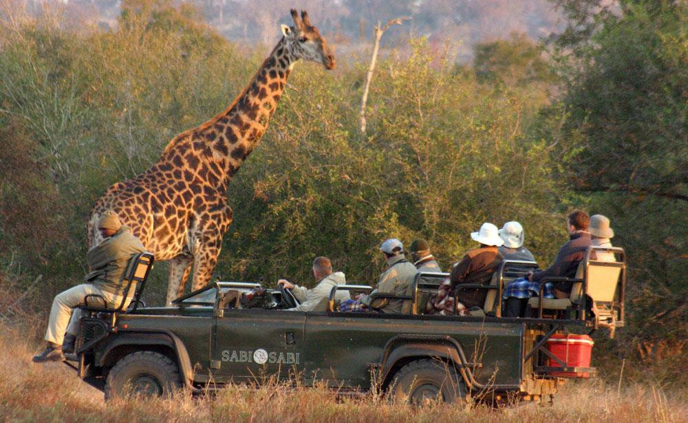 sabi sabi safari game drive giraffe enkosi africa consejos de safari