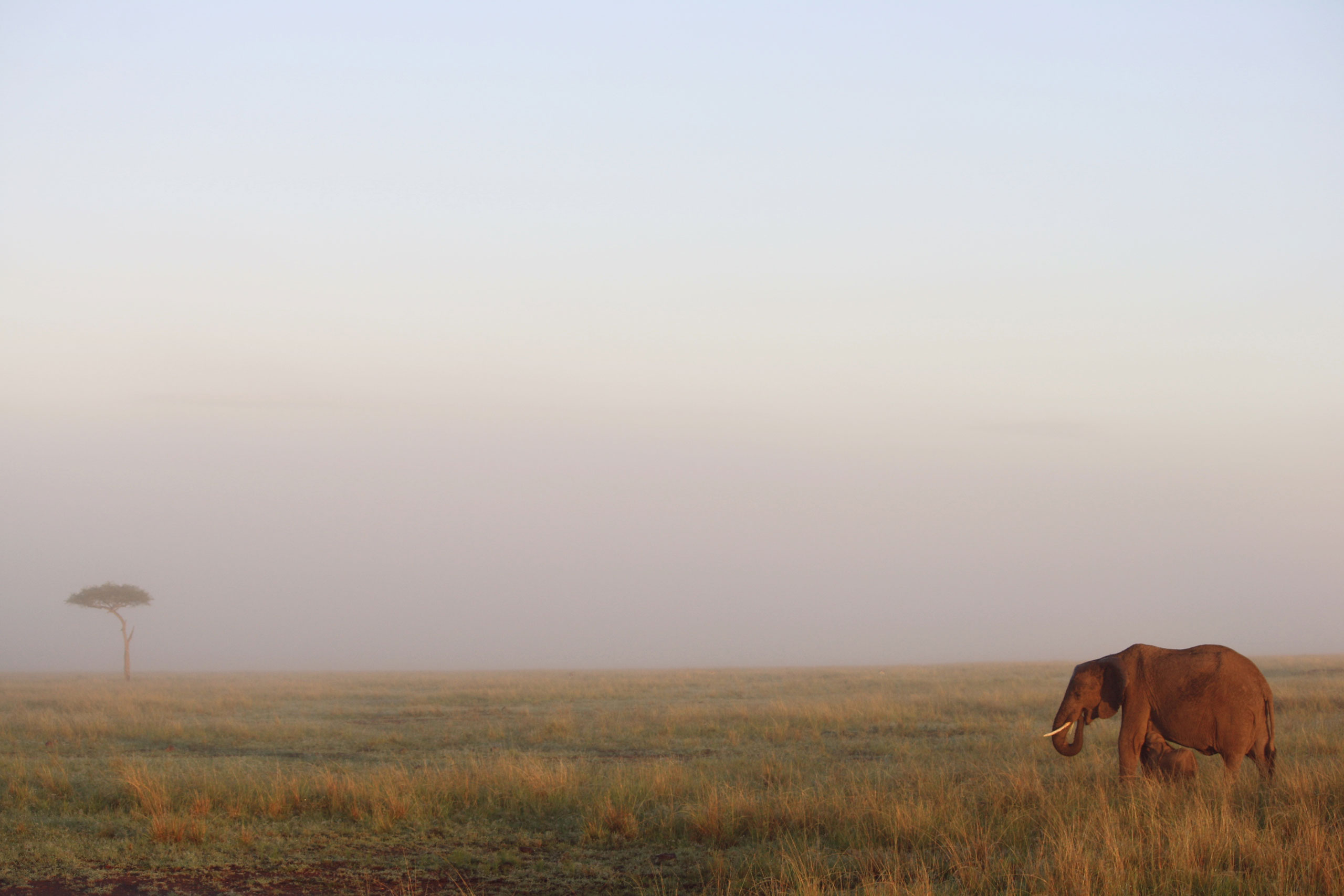 safari estación lluvias enkosi africa masai mara kenya elephant landscape acacia
