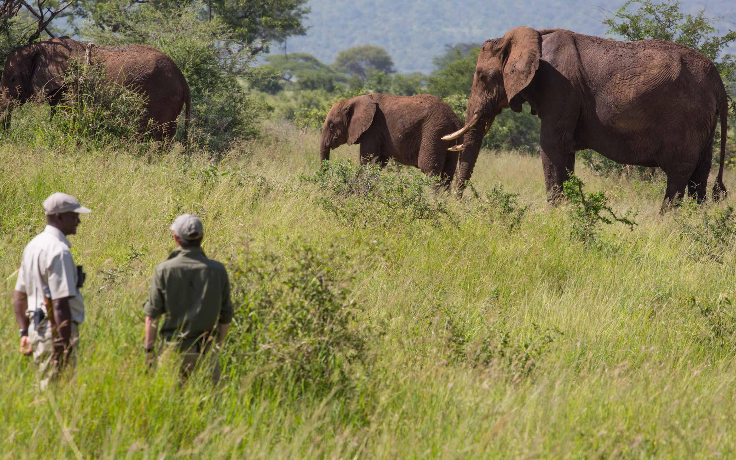 enkosi-africa-safari-tanzania-tarangire-treetops-elewana