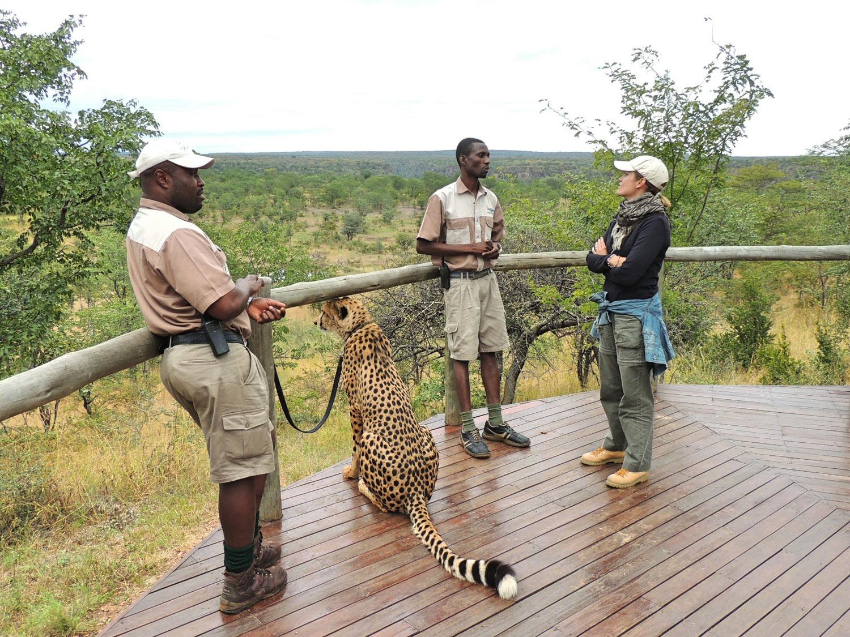 The Elephant Camp Victoria Falls Zimbabwe guepardo (6)