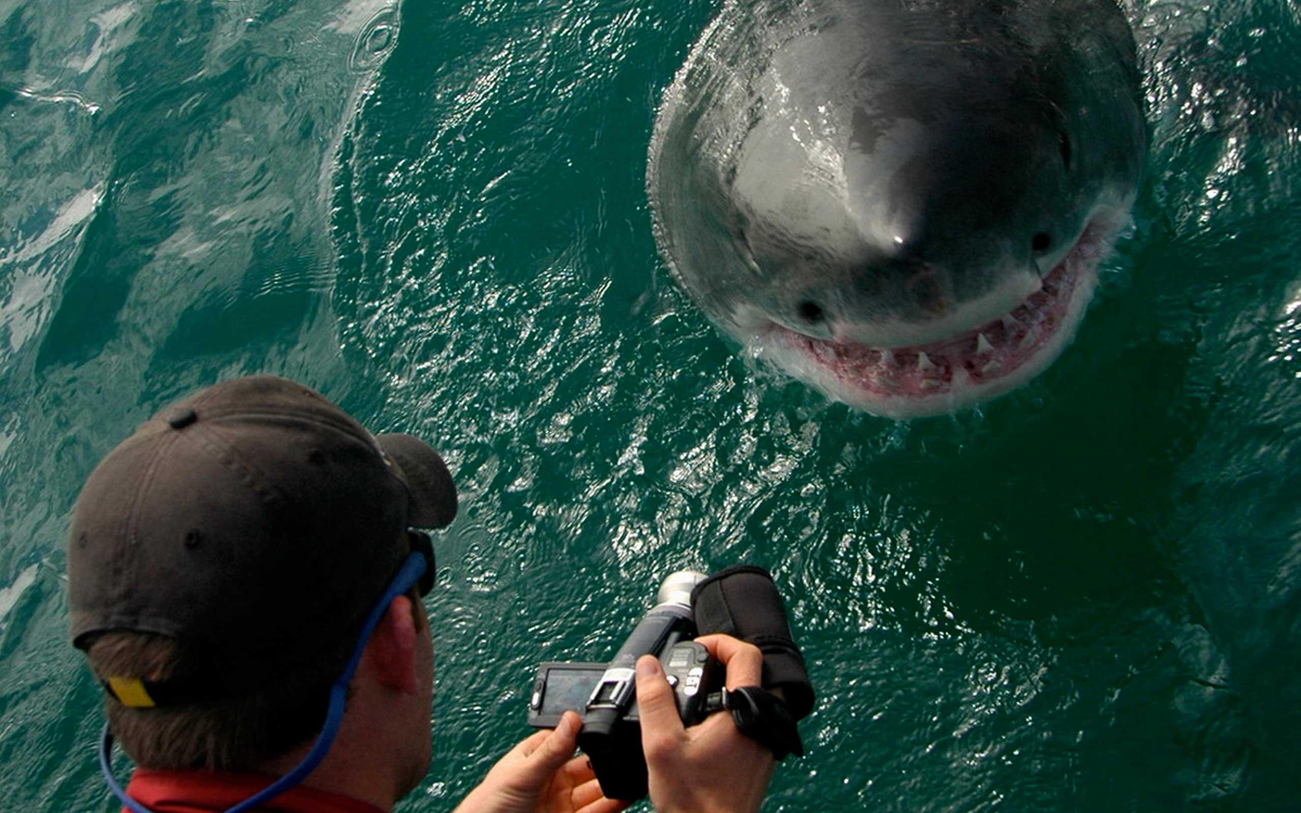grootbos-great-white-shark-south-africa-enkosi