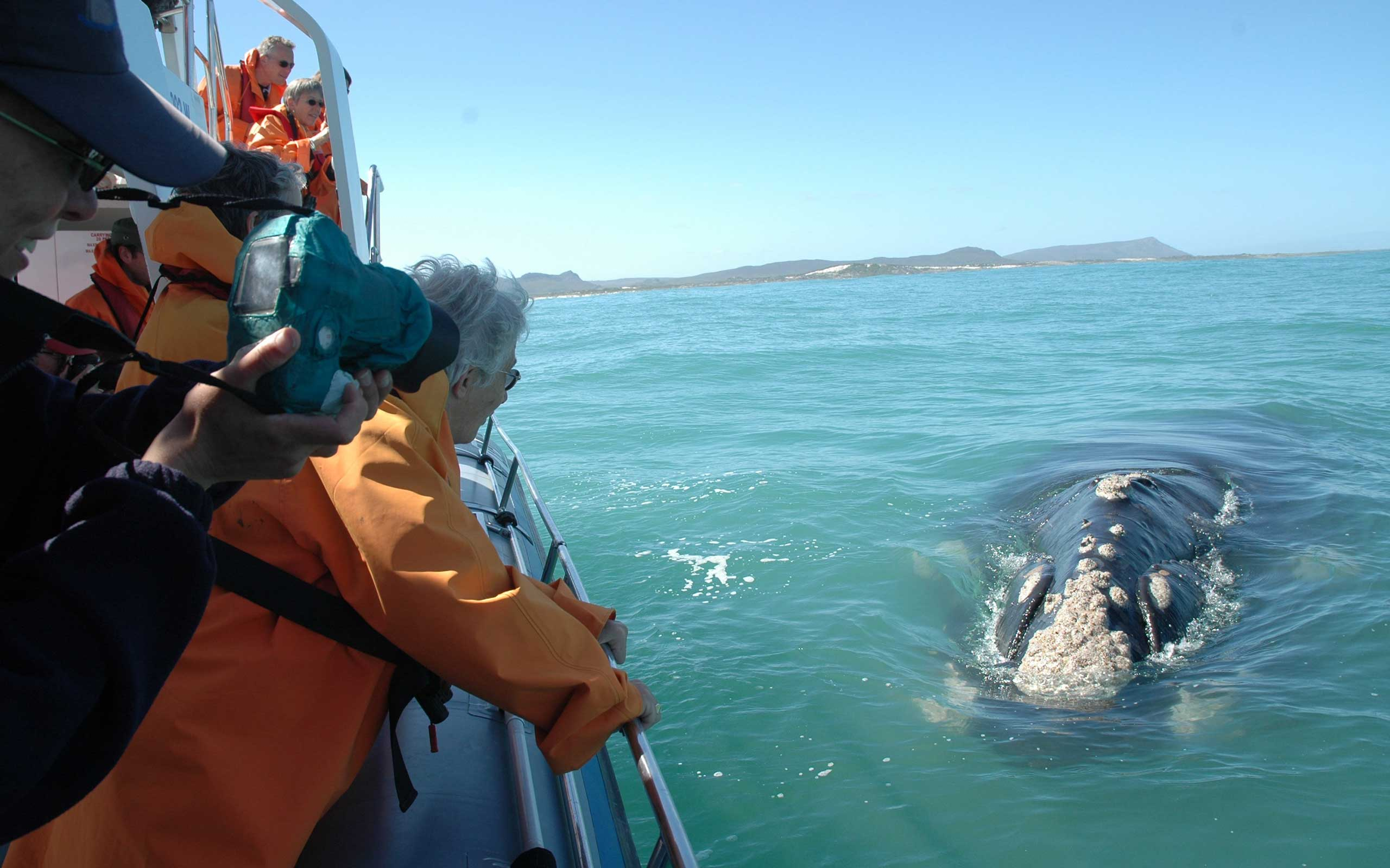 grootbos-whale-watching-south-africa-enkosi