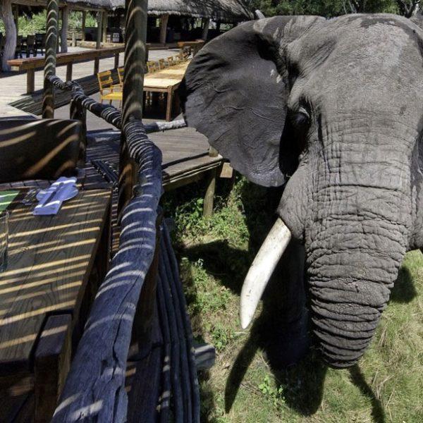 Consejos de Etiqueta en Safari