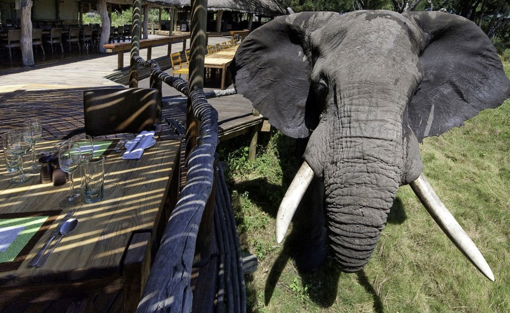 mombo-camp-elefante