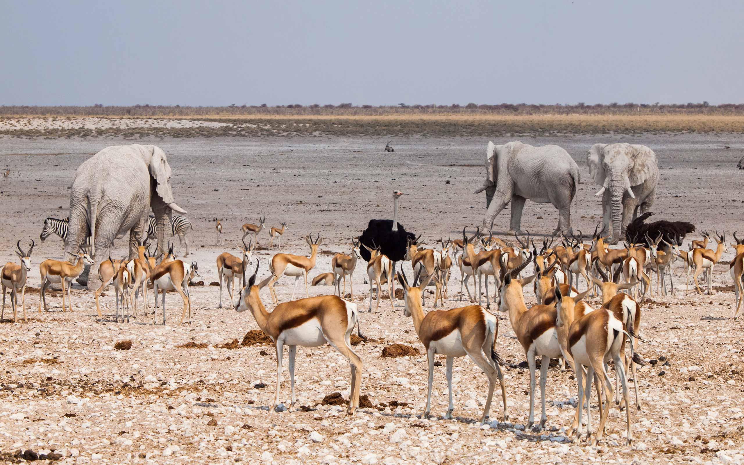 enkosi-africa-safari-Namibia-taleni-etosha-village