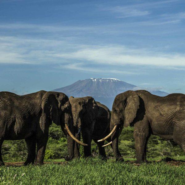 El Parque Nacional Amboseli y Chyulu Hills