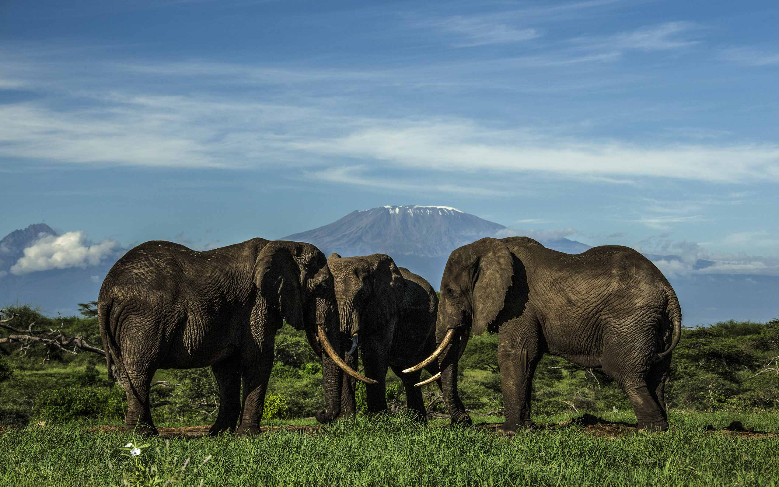 enkosi-africa-safari-kenya-amboseli-chyulu-ol-donyo-lodge-great-plains-conservation-kilimanjaro-elephant