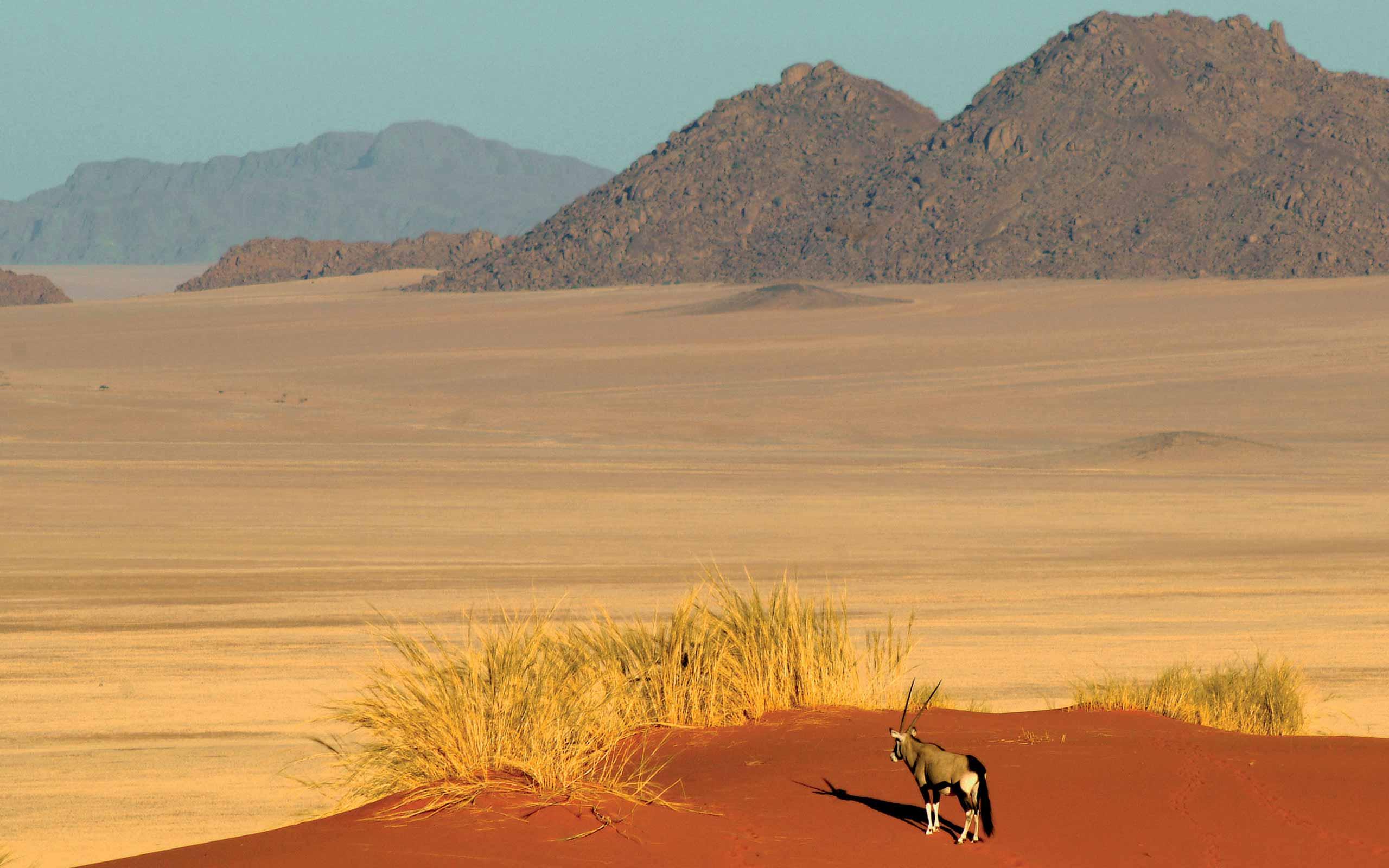 enkosi-africa-safari-namibia-namibrand-wolwedans-landscape-oryx
