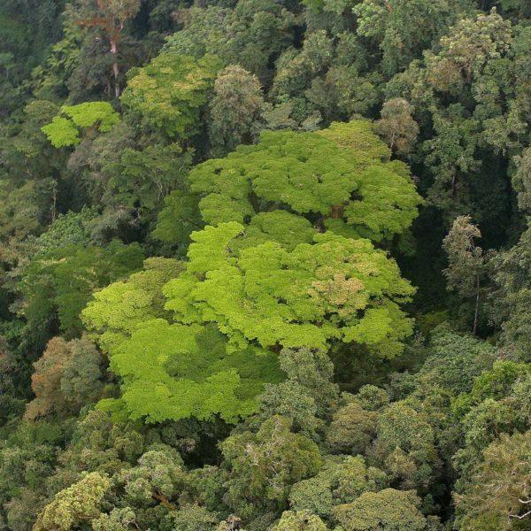 El Parque Nacional del Bosque de Nyungwe