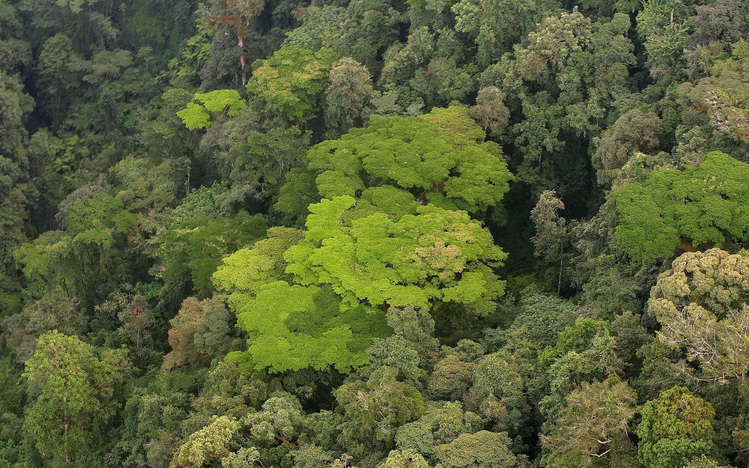 enkosi-africa-safari-rwanda-Nyungwe-forest