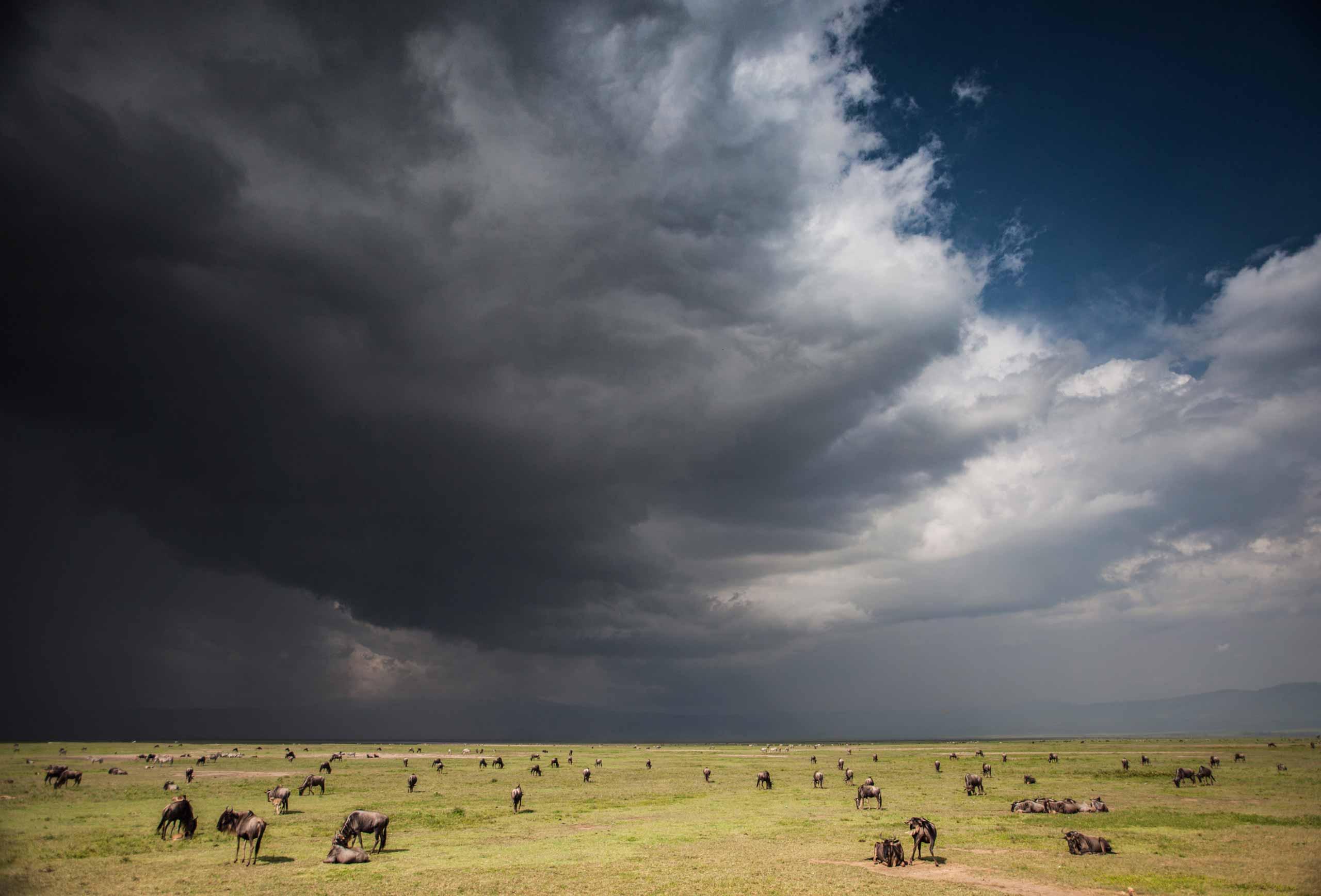 enkosi-africa-safari-tanzania-ngorongoro-crater-manor-niels-van-gijn-elewana-landscape