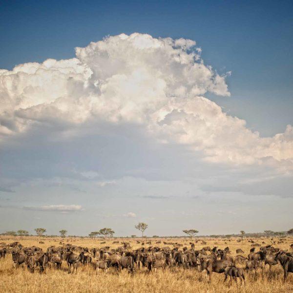 El Parque Nacional Serengeti