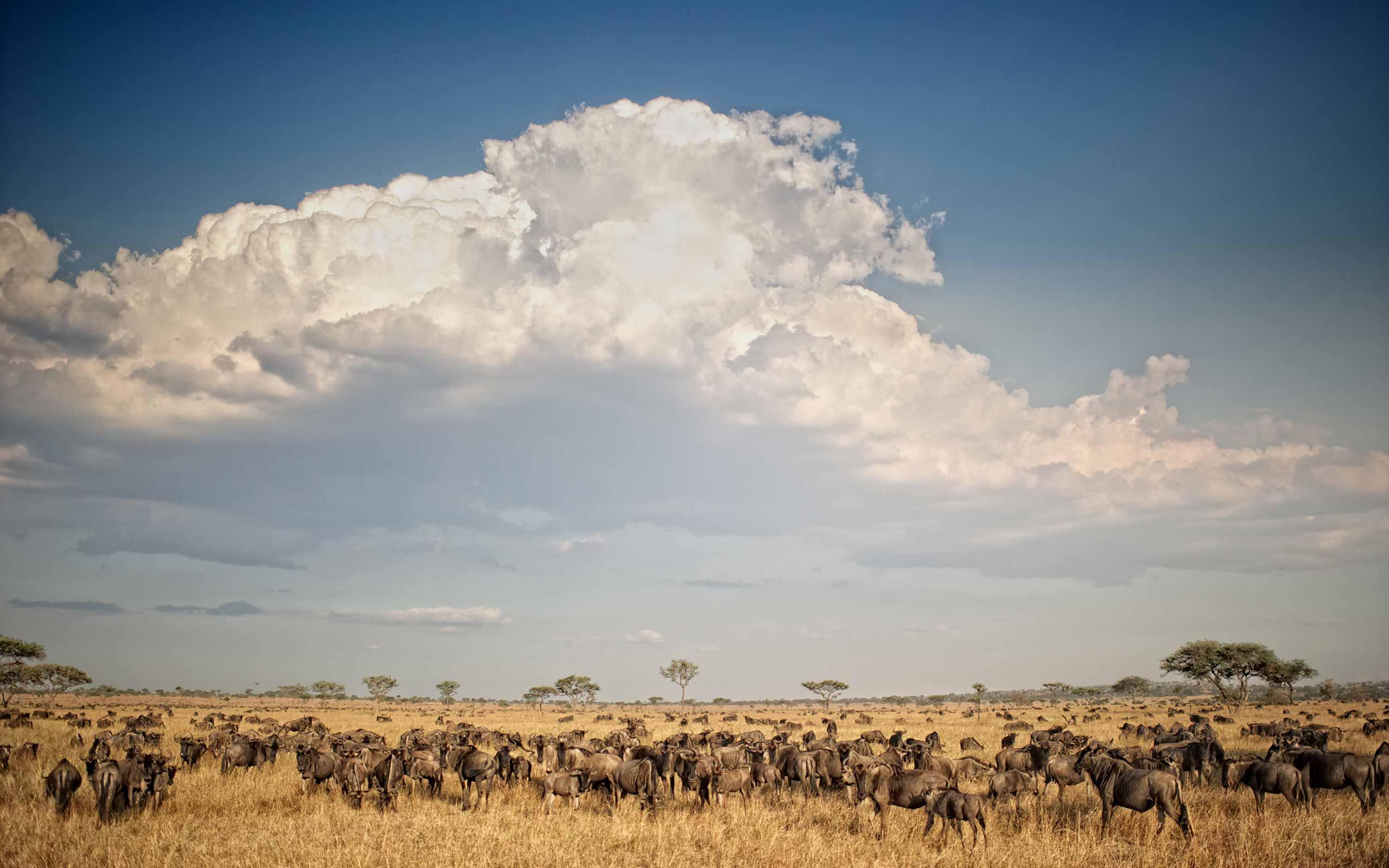 enkosi-africa-safari-tanzania-serengeti-grumeti-singita-migration