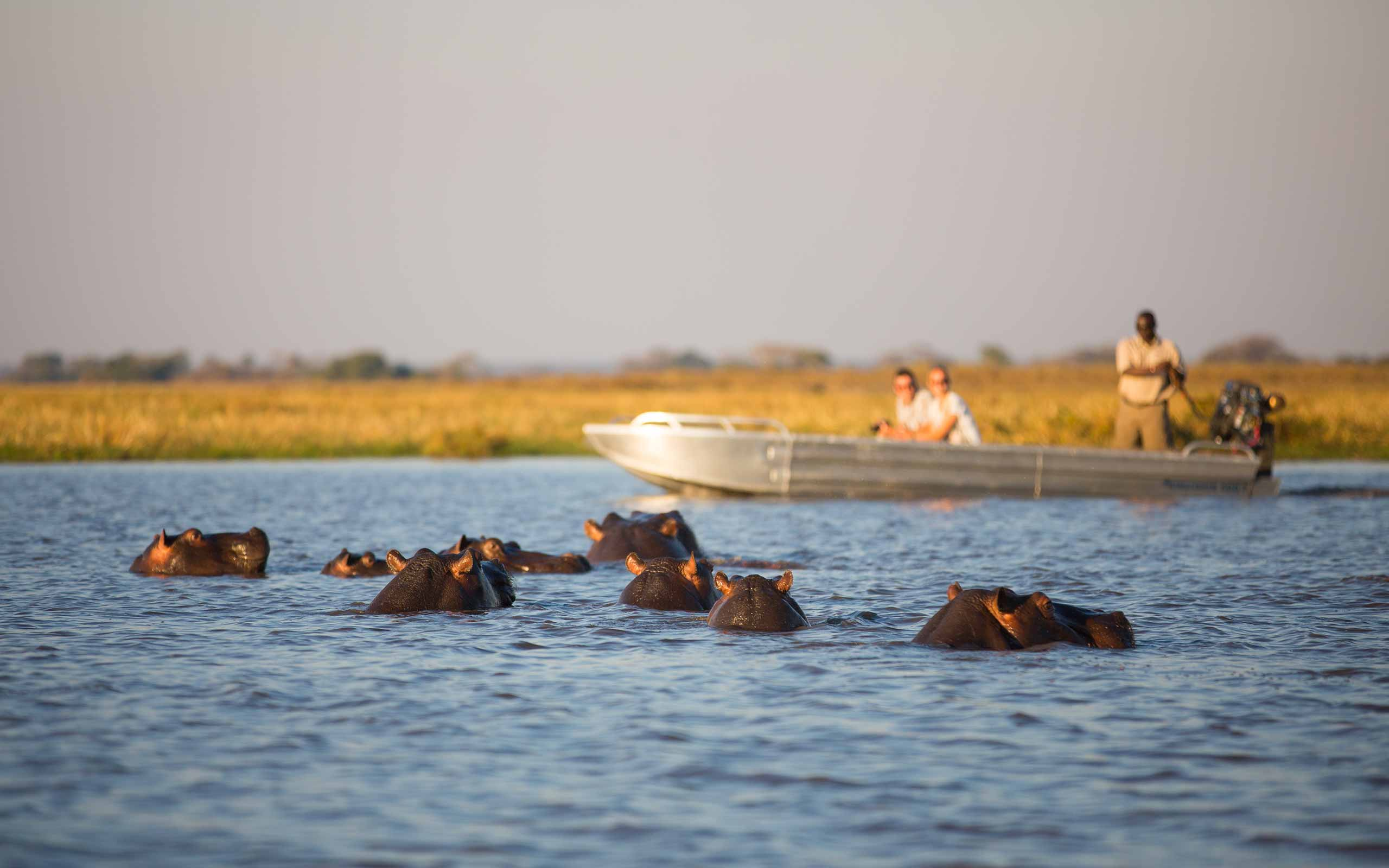 enkosi-africa-safari-zambia-kafue-shumba-camp-wilderness-river-hippo