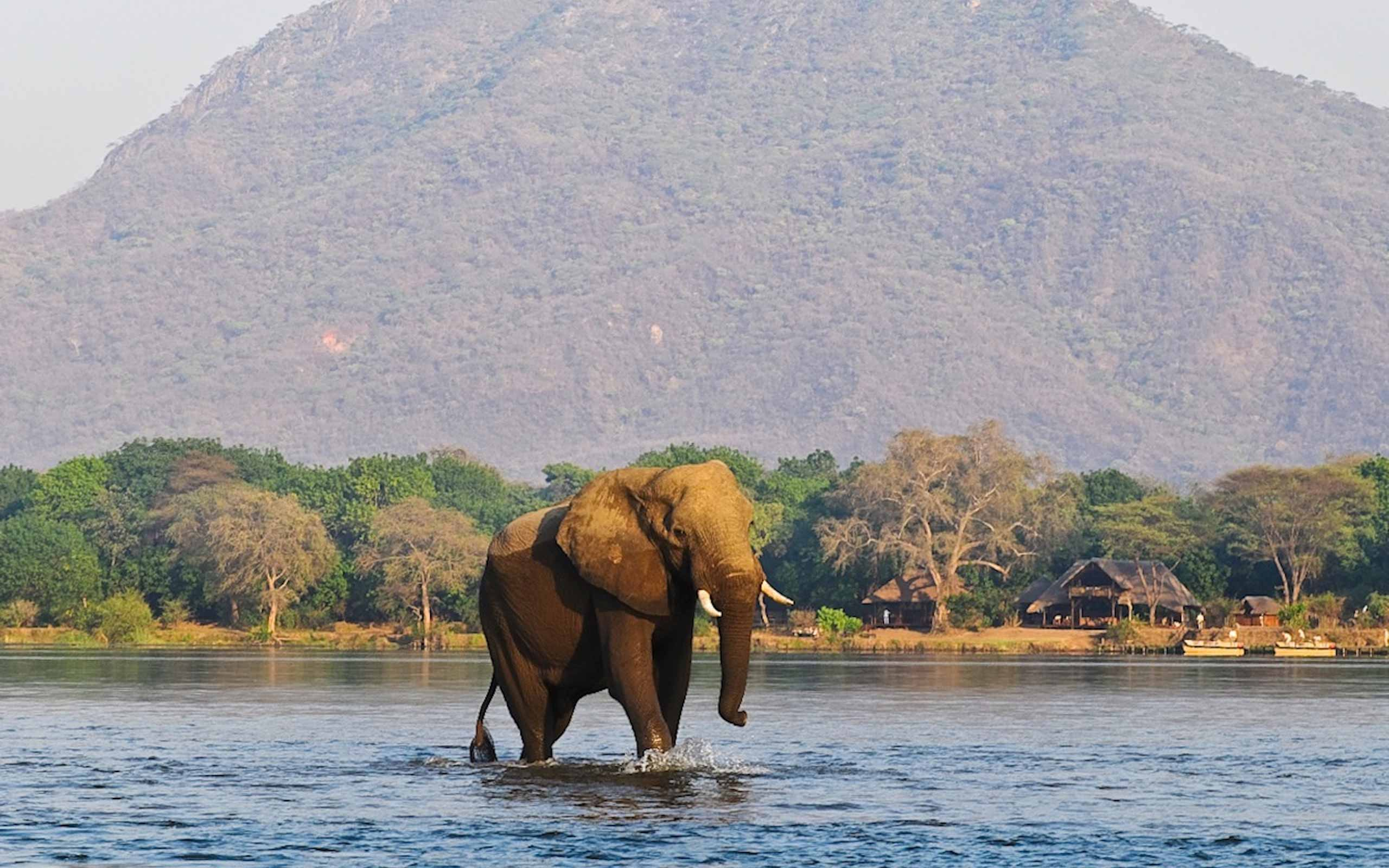 enkosi-africa-safari-zambia-lower-zambezi-chiawa-camp-elephant