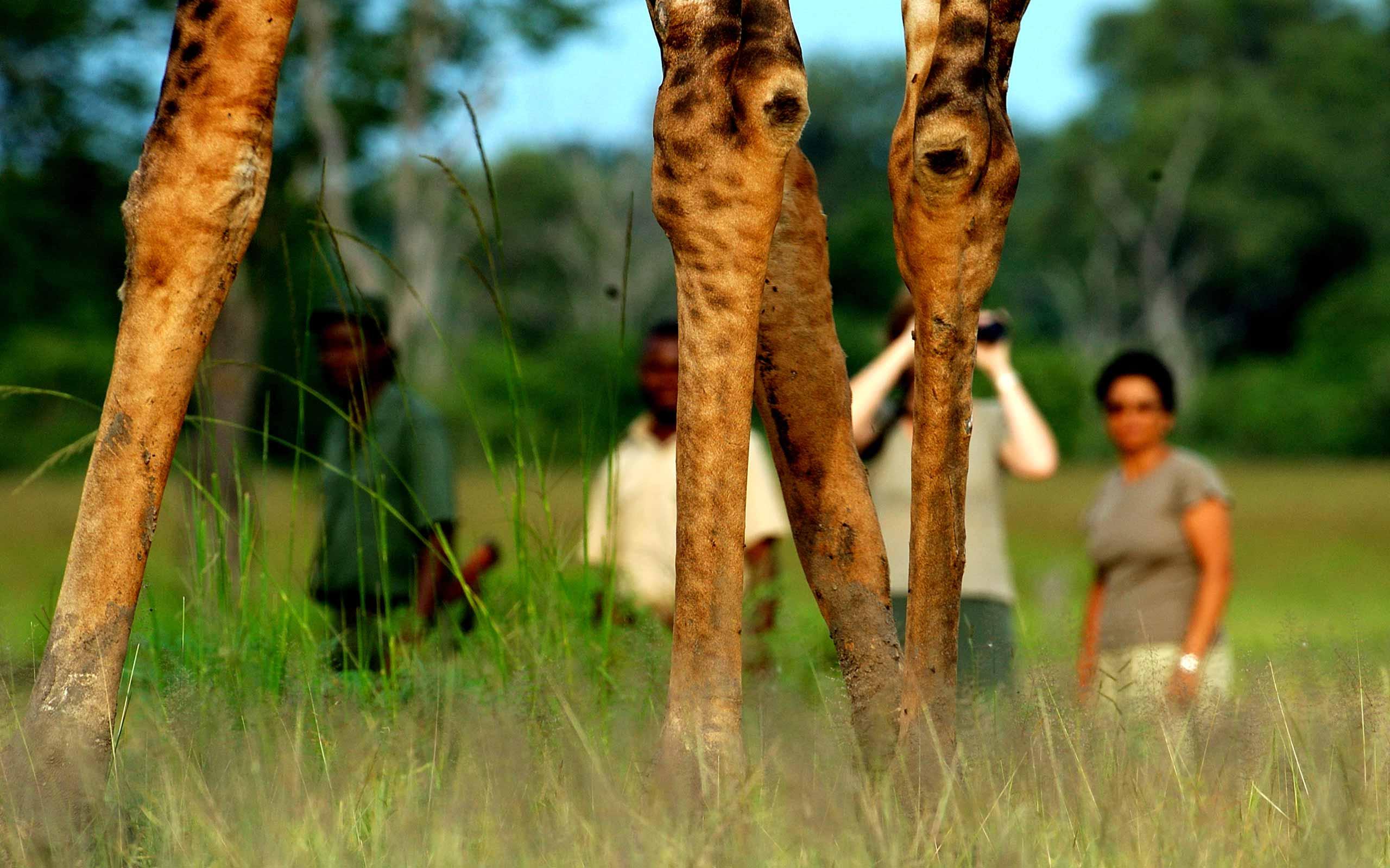 enkosi-africa-safari-zambia-south-luangwa-chindeni-bushcamp-walking-safari