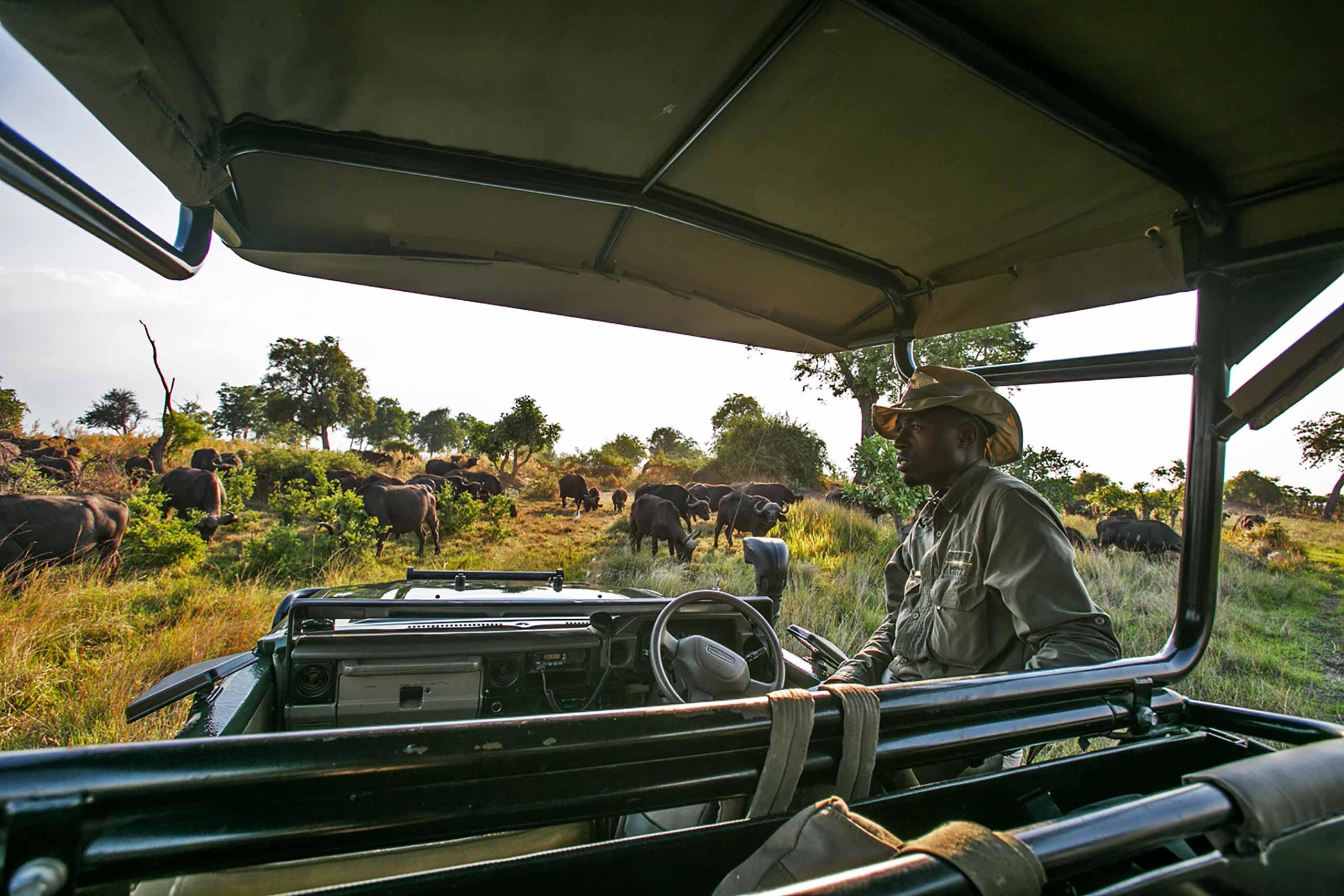 Enkosi-Africa-Safari-Botswana-Okavango-Delta-DubaExplorersCamp-Safari-Experience-GreatPlainsConservation-Game-Drive-1