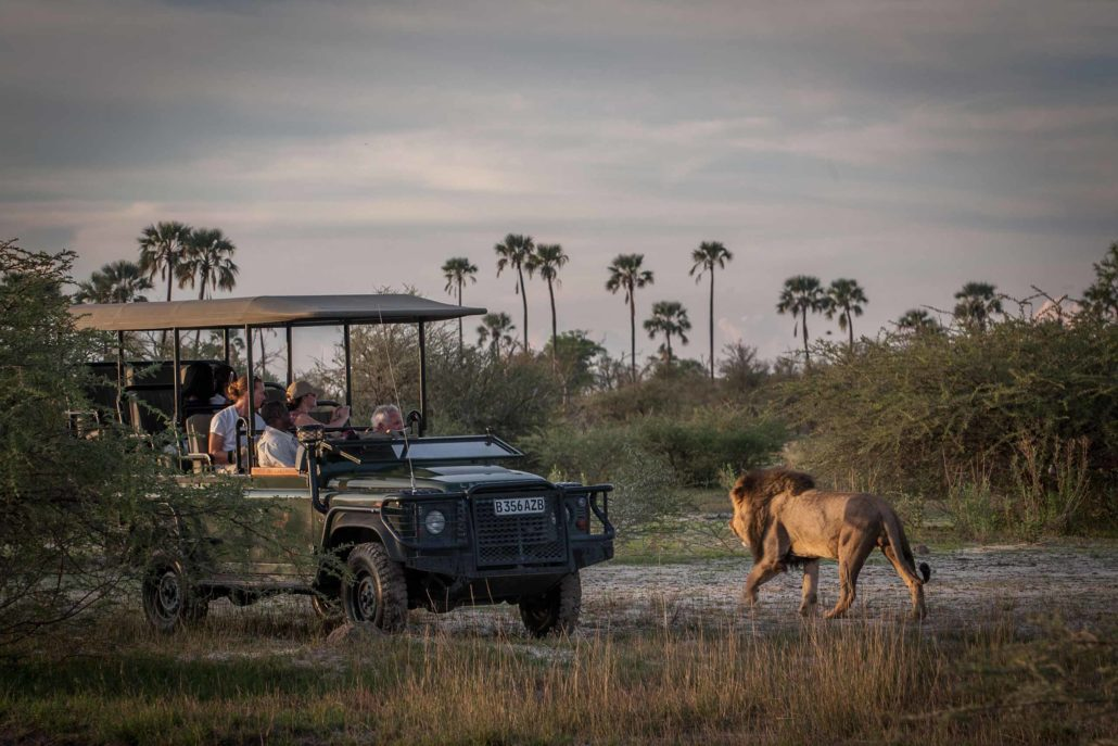 enkosi-africa-safari-botswana-okavango-delta-chitabe-camp-wilderness-game-drive-lion
