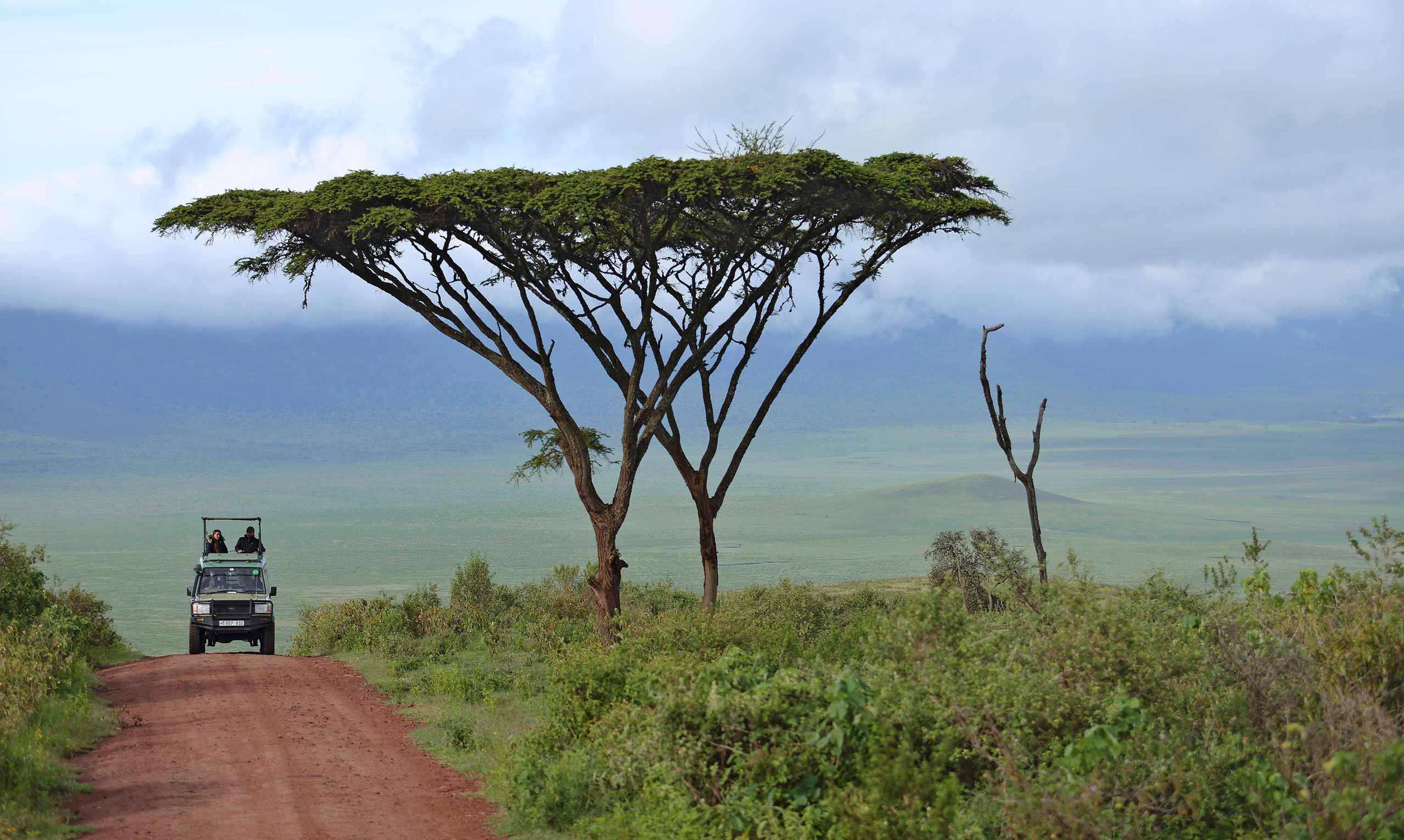 enkosi africa safari tanzania ngorongoro asilia The-Highlands-Ngorongoro-Descent-Road