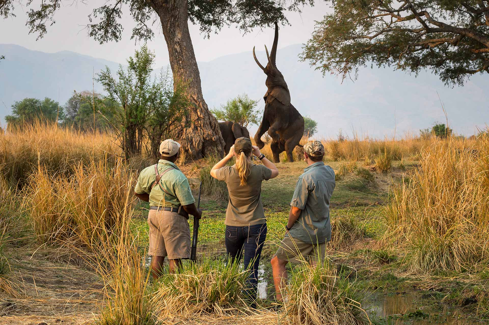 enkosi-africa-safari-zimbabwe-mana-pools-ruckomechi-camp-wilderness-game-walk-elephant