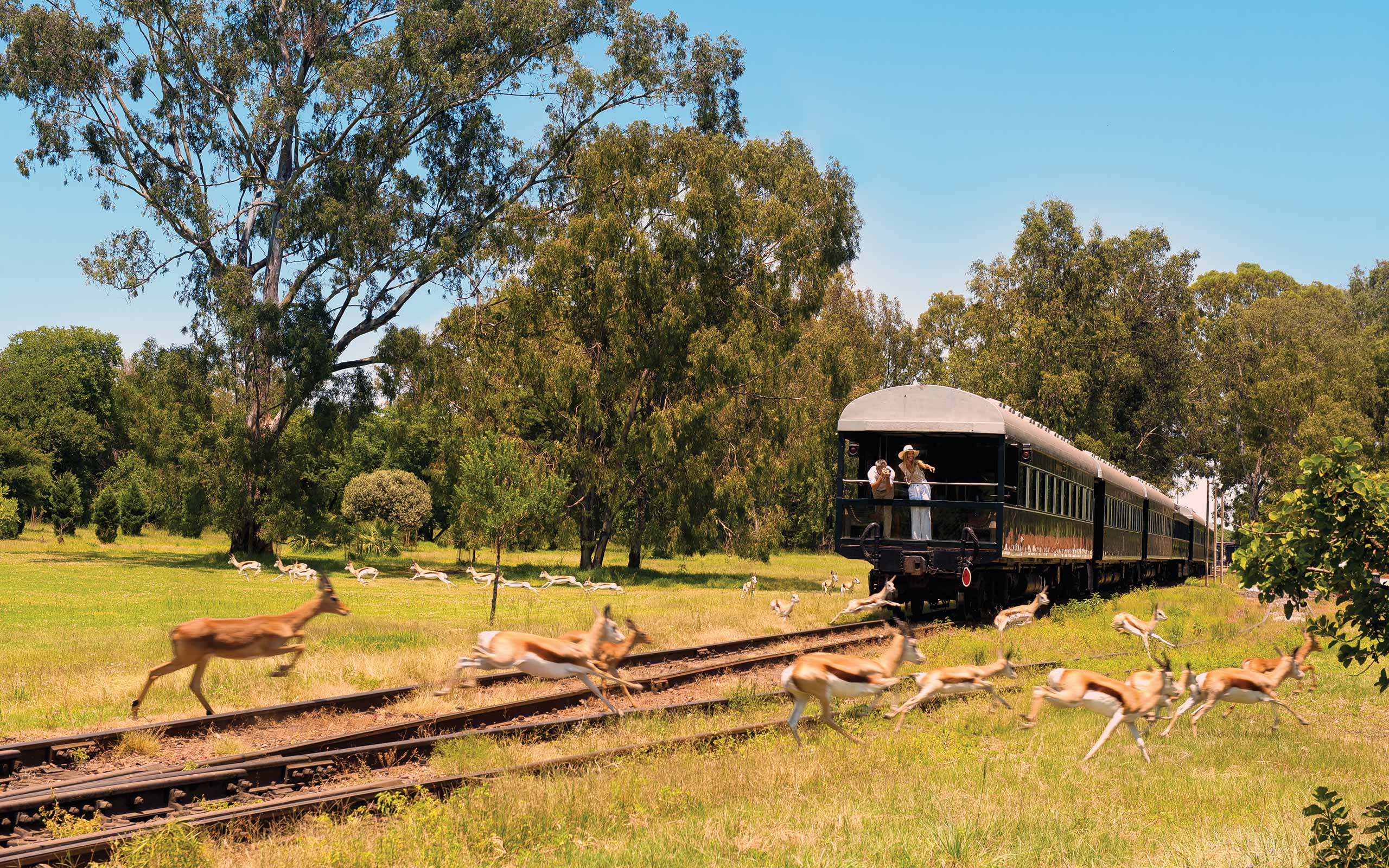 enkosi-africa-safari-rovos-rail-tren-train-observatory
