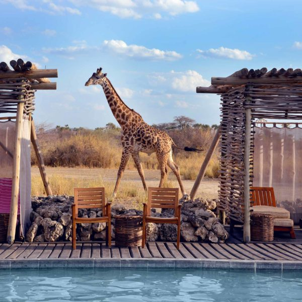 Safaris: África del Este vs. África del Sur