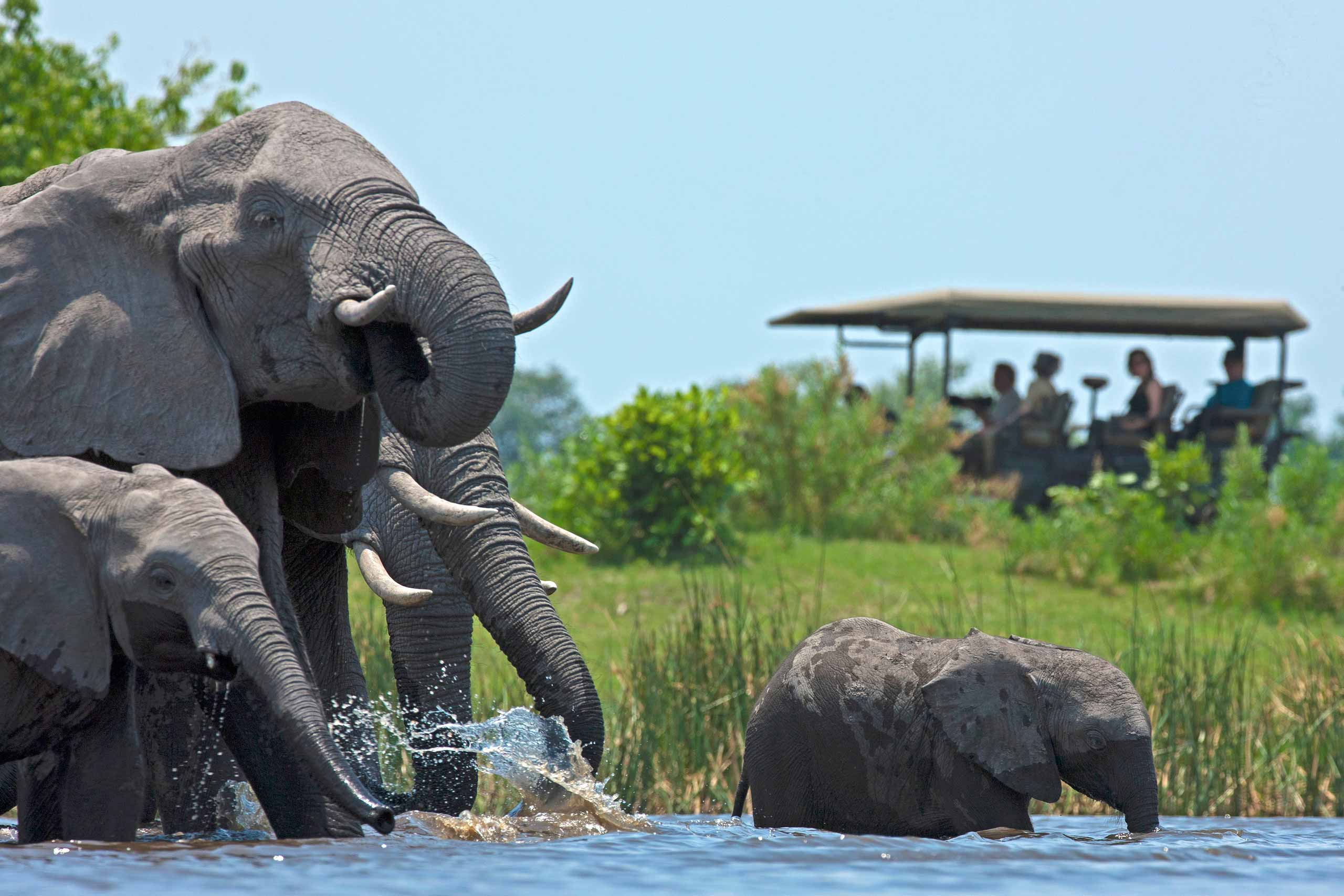 enkosi-africa-safari-botswana-selinda-Zarafa-Dhow-Suites-Camp-Great-Plains-Conservation-game-drive-elephants