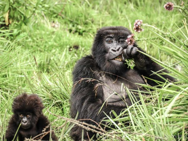 5 días – Classic Gorilla Trekking en Rwanda