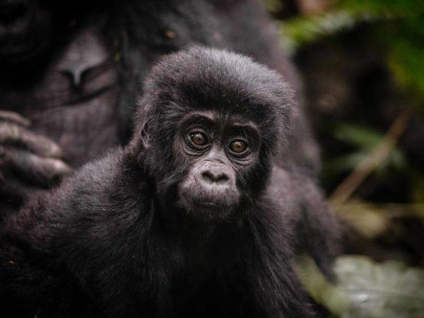 13 días – East Africa & Gorilla Safari