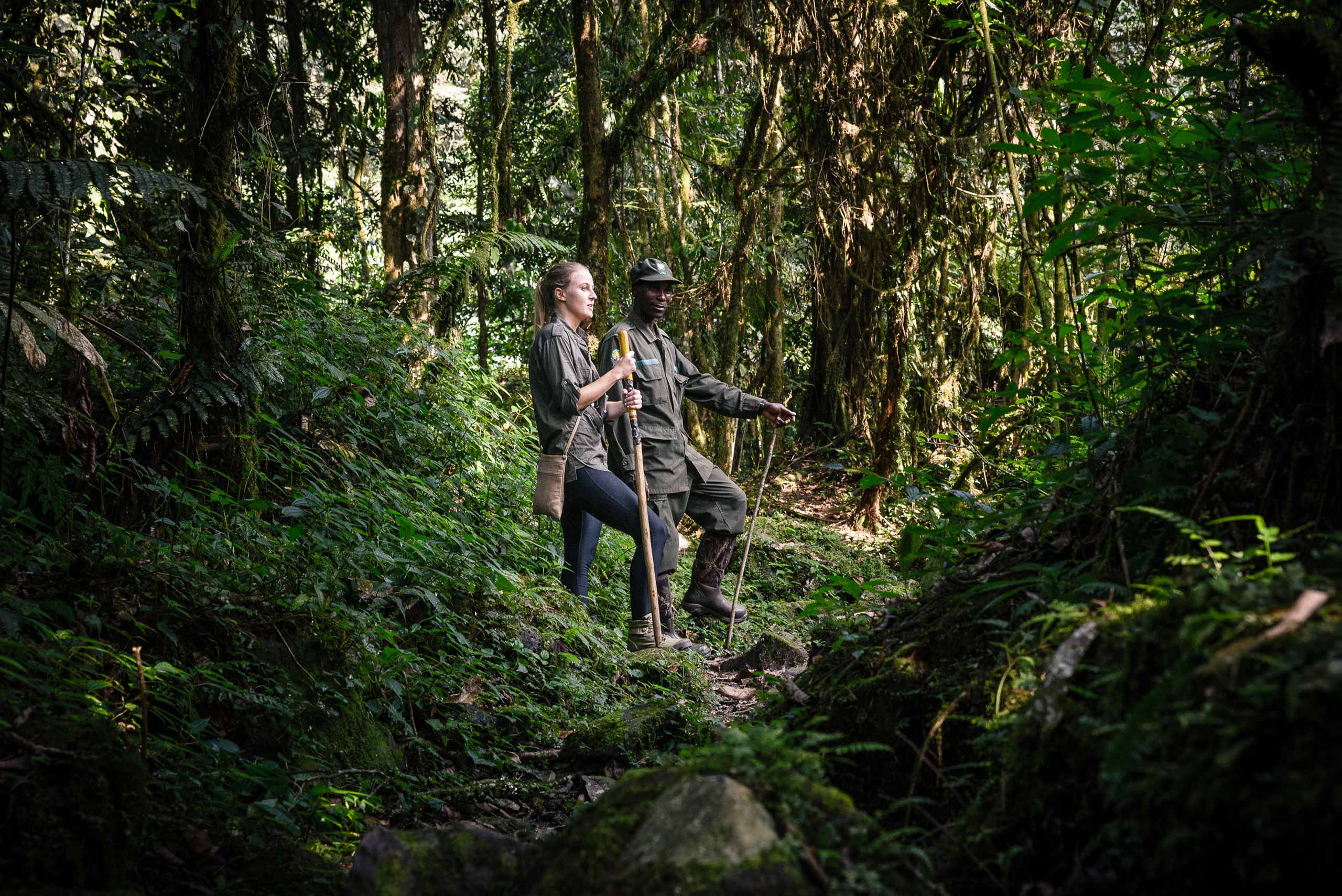 enkosi-africa-safari-uganda-bwindi-impenetrable-gorilla-forest-camp-sanctuary-experience-gorilla-trek