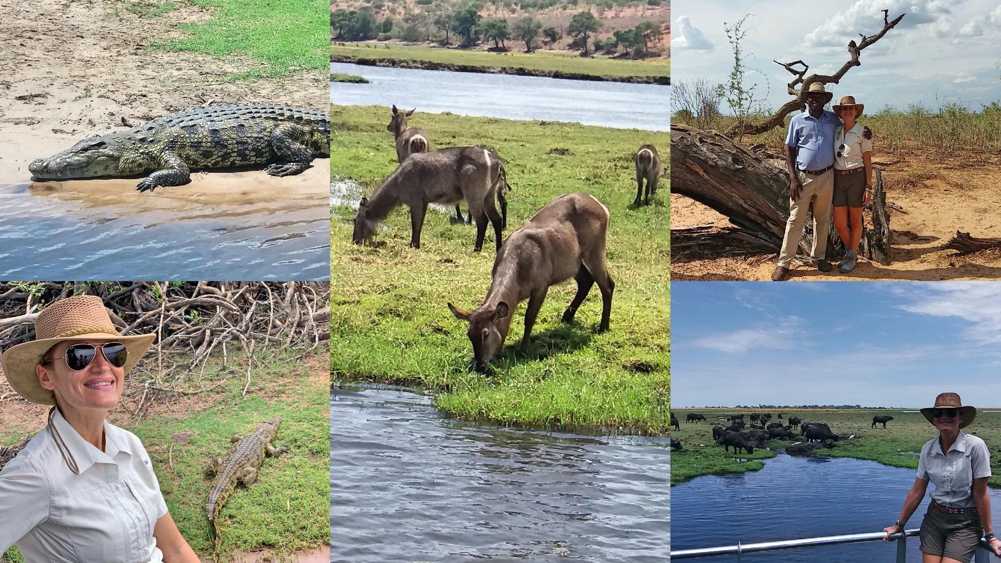 enkosi africa chobe sara botswana