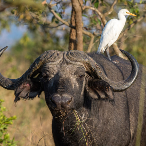 Coronavirus: Medidas que Afectan a Safaris en África